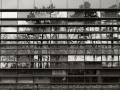 Reflectie van bomen in Glas